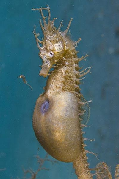Beste Unterwasserfotografien 2010 Best_Underwater_Fotagraphy_2010_05