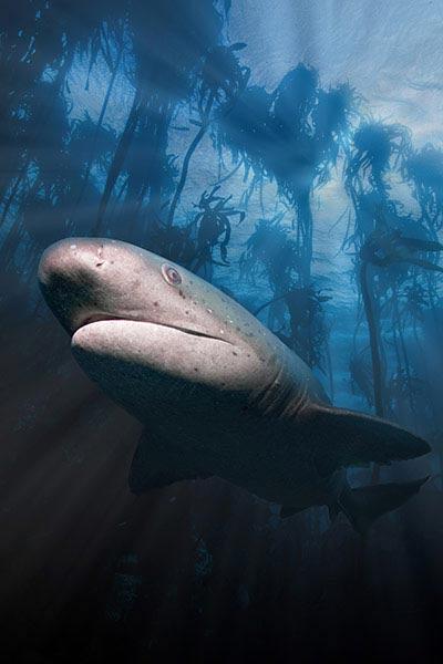 Beste Unterwasserfotografien 2010 Best_Underwater_Fotagraphy_2010_07
