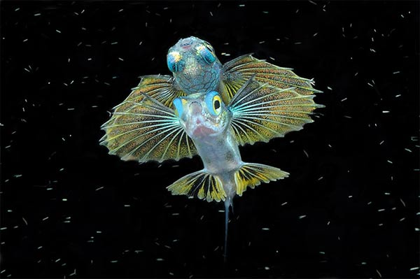 Best Underwater Fotography 2010