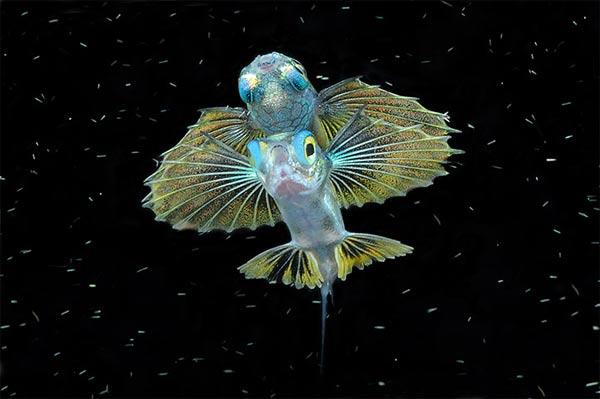 Beste Unterwasserfotografien 2010 Best_Underwater_Fotagraphy_2010_08