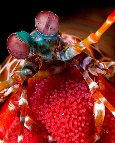 Beste Unterwasserfotografien 2010 Best_Underwater_Fotagraphy_2010_09