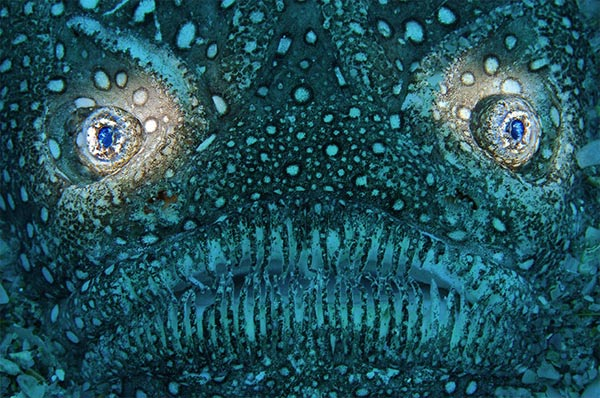 Beste Unterwasserfotografien 2010 Best_Underwater_Fotagraphy_2010_11