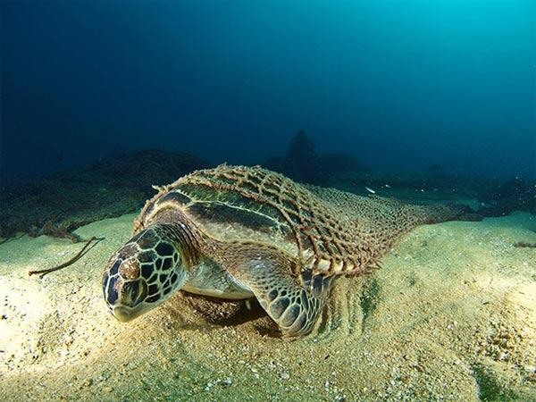 Beste Unterwasserfotografien 2010 Best_Underwater_Fotagraphy_2010_14