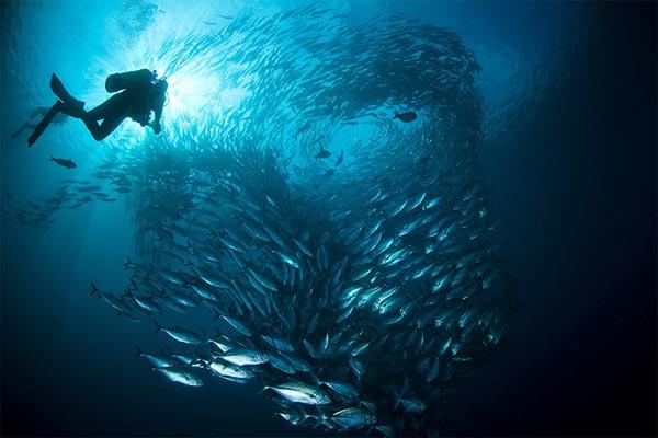 Beste Unterwasserfotografien 2010 Best_Underwater_Fotagraphy_2010_15