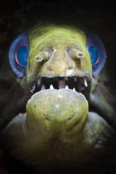 Beste Unterwasserfotografien 2010 Best_Underwater_Fotagraphy_2010_16