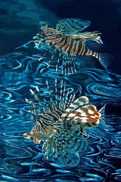 Beste Unterwasserfotografien 2010 Best_Underwater_Fotagraphy_2010_17