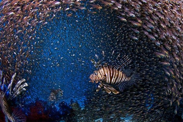 Beste Unterwasserfotografien 2010 Best_Underwater_Fotagraphy_2010_20