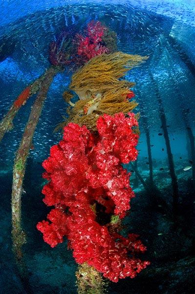 Beste Unterwasserfotografien 2010 Best_Underwater_Fotagraphy_2010_21