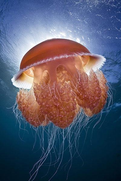 Beste Unterwasserfotografien 2010 Best_Underwater_Fotagraphy_2010_22