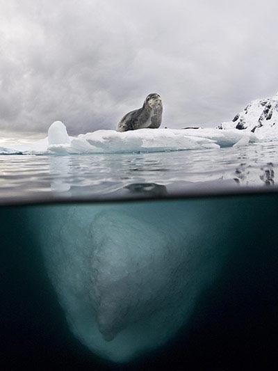 Beste Unterwasserfotografien 2010 Best_Underwater_Fotagraphy_2010_23
