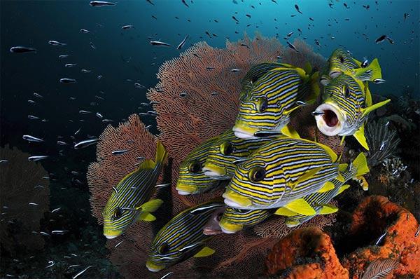 Beste Unterwasserfotografien 2010 Best_Underwater_Fotagraphy_2010_24
