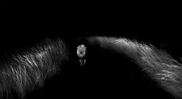 Fotografie: Die südafrikanische Wildnis HannesLochner_01