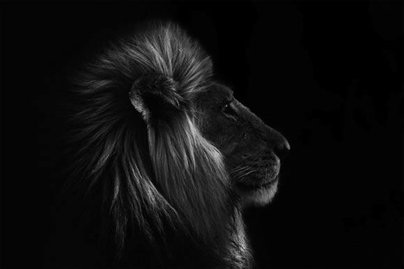 Fotografie: Die südafrikanische Wildnis HannesLochner_02