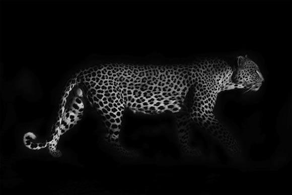 Fotografie: Die südafrikanische Wildnis HannesLochner_06