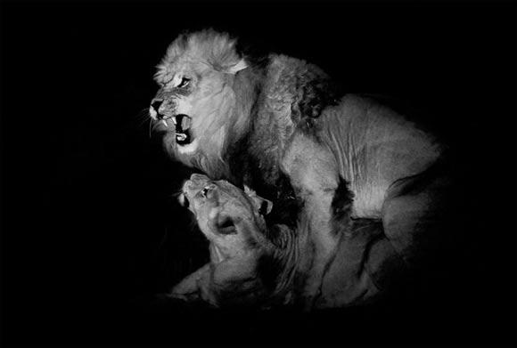Fotografie: Die südafrikanische Wildnis HannesLochner_07