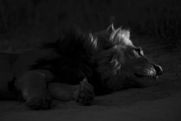 Fotografie: Die südafrikanische Wildnis HannesLochner_08