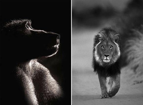 Fotografie: Die südafrikanische Wildnis HannesLochner_09