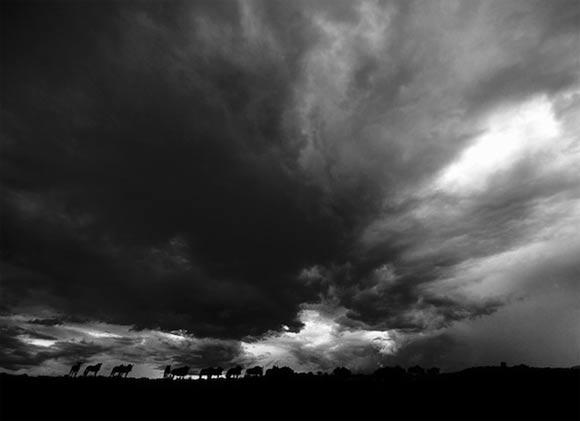 Fotografie: Die südafrikanische Wildnis HannesLochner_10