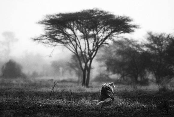 Fotografie: Die südafrikanische Wildnis HannesLochner_11