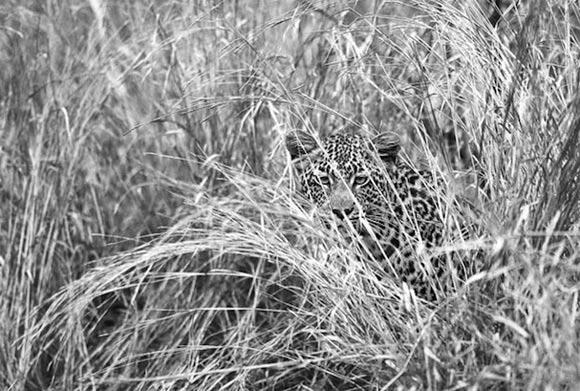 Fotografie: Die südafrikanische Wildnis HannesLochner_12