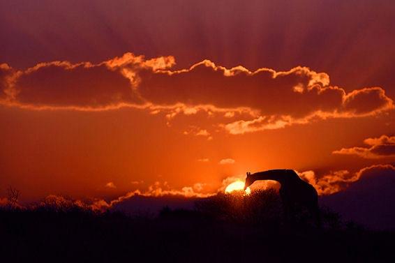 Fotografie: Die südafrikanische Wildnis HannesLochner_14