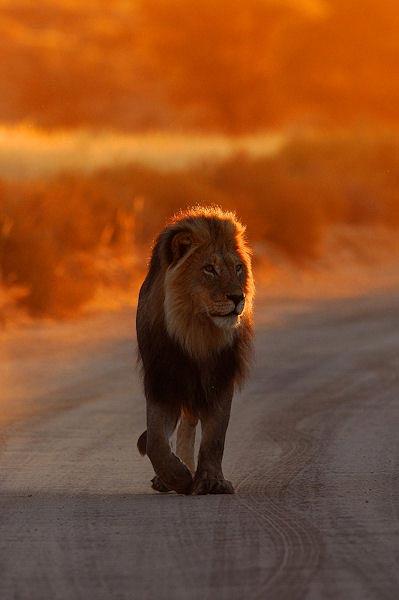 Fotografie: Die südafrikanische Wildnis HannesLochner_15
