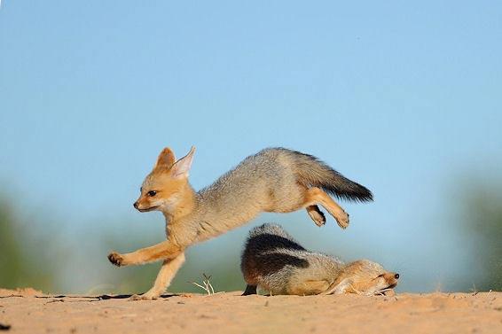 Fotografie: Die südafrikanische Wildnis HannesLochner_16