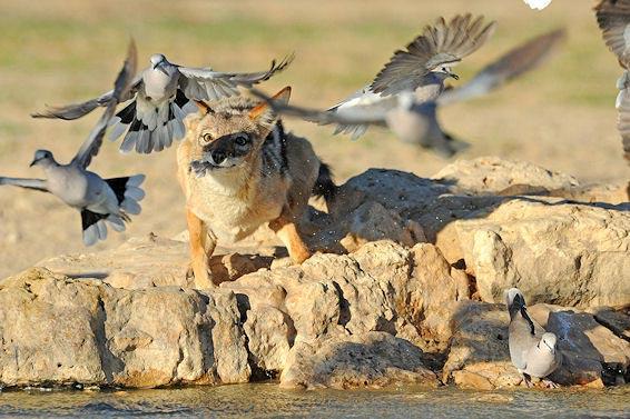 Fotografie: Die südafrikanische Wildnis HannesLochner_17