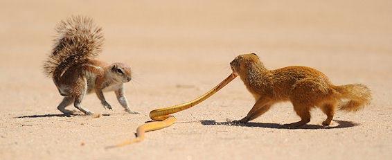 Fotografie: Die südafrikanische Wildnis HannesLochner_18
