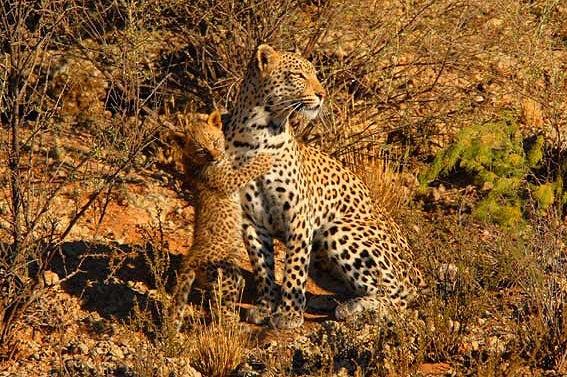 Fotografie: Die südafrikanische Wildnis HannesLochner_21