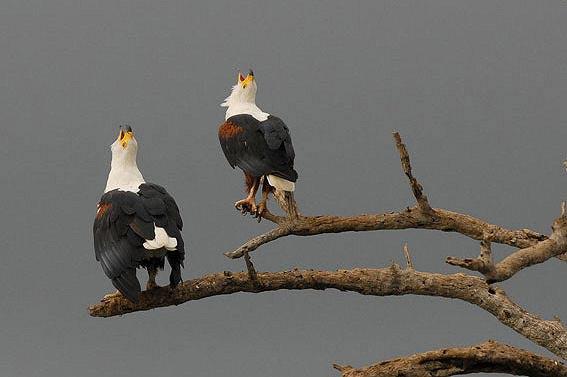 Fotografie: Die südafrikanische Wildnis HannesLochner_22