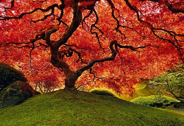 photography by Peter Lik