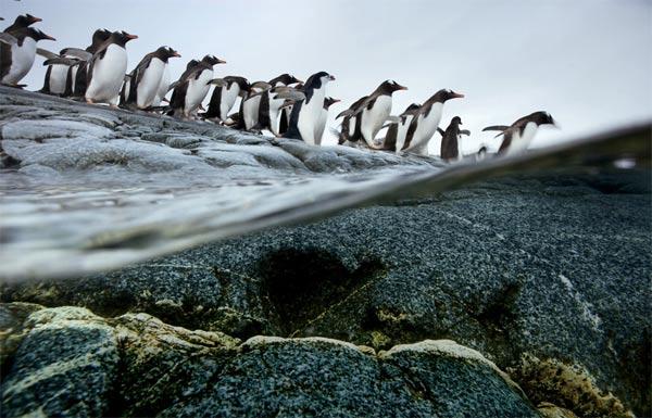 Die Wanderschaft der Tiere migrationstiere