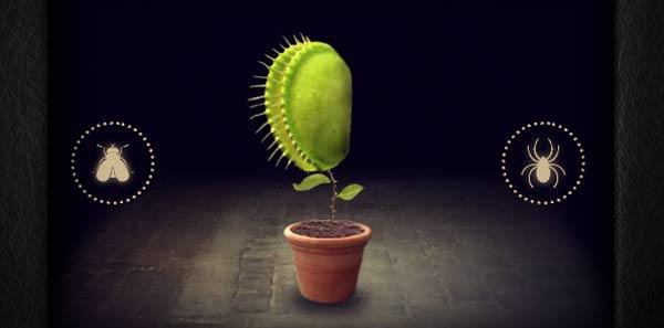 Verrückte Pflanzenentwicklung mitoza