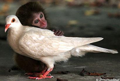 Ooooooooooooooohhhhh.... monkeydove