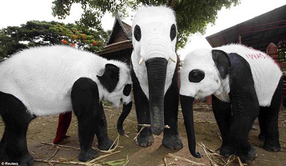 Aufmerksamkeit! panda-elephants