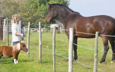 acer_miniature_horse
