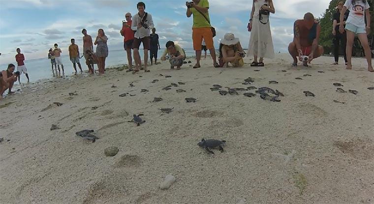 Die Geburt von 150 Baby-Schildkröten seaturtles