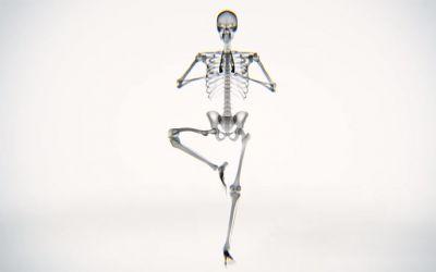 skelett_yoga