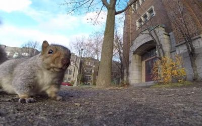 squirrel_gopro