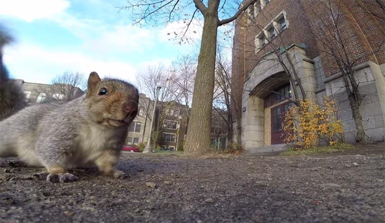 Eichhörnchen klaut GoPro squirrel_gopro