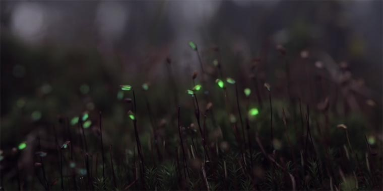 Bioluminescent Forrest projections_in_the_forrest