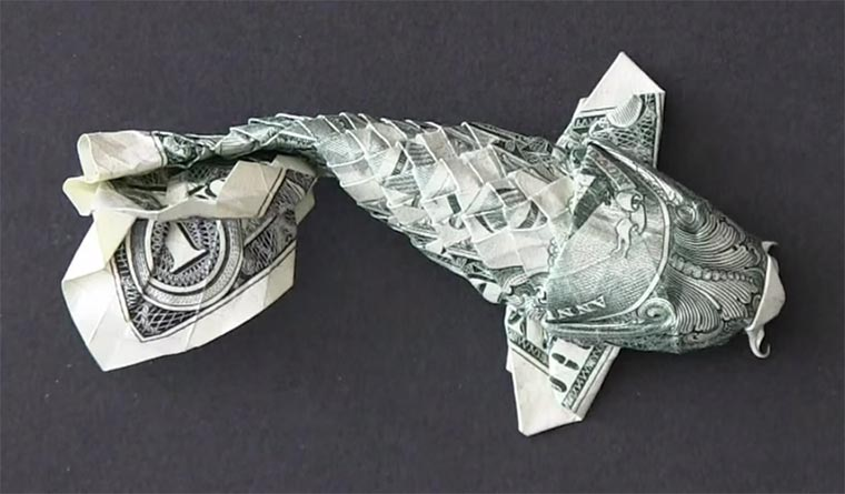 Timelapse: Dollarschein wird Koi Dollar-Koi