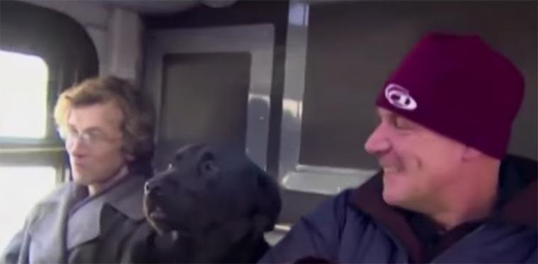 Hund fährt mit dem Bus zum Park black-lab_solo-bus
