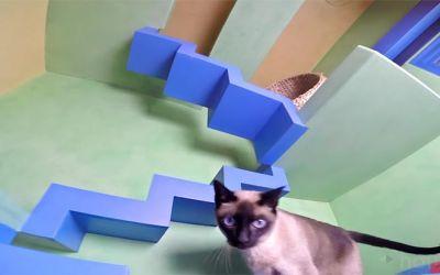 cat-house