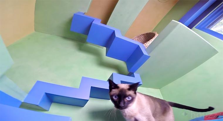 Ein Erlebnishaus für Katzen cat-house