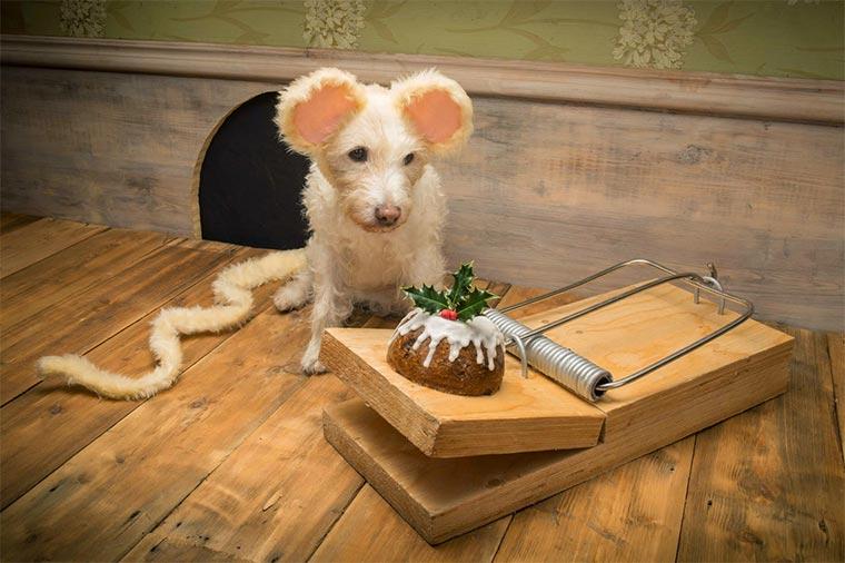 Wandelbarer Weihnachtskarten-Hund christmas_dog_01