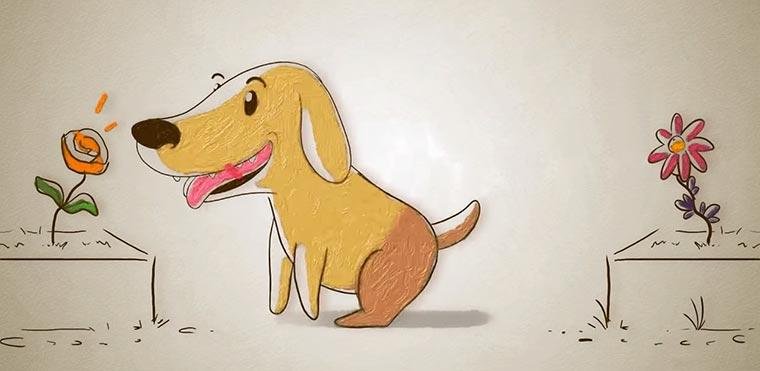 Wie Hunde mit der Nase sehen Hunderiechen