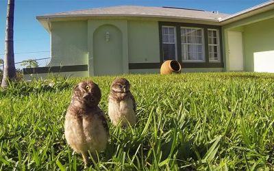 Owl-Dance-off