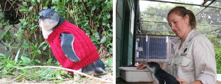 Putzige Pinguin-Pullover Penguin-Sweaters_02